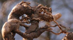 Desert root