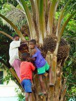 Boys Climbing a Tree - Maputo, Mozambique